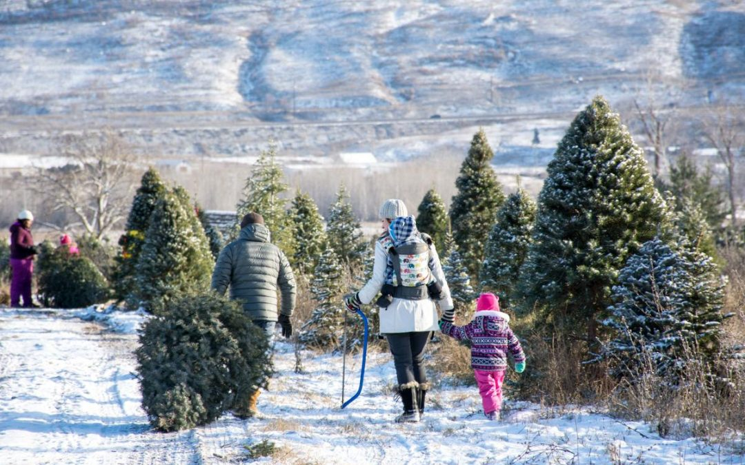 Woodward Christmas Tree Farm Opening